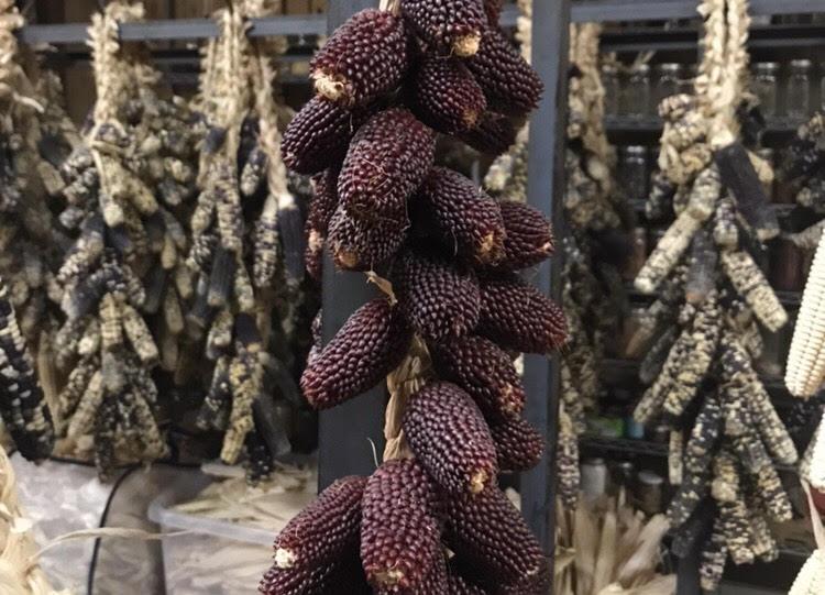 popcorn corn red seeds