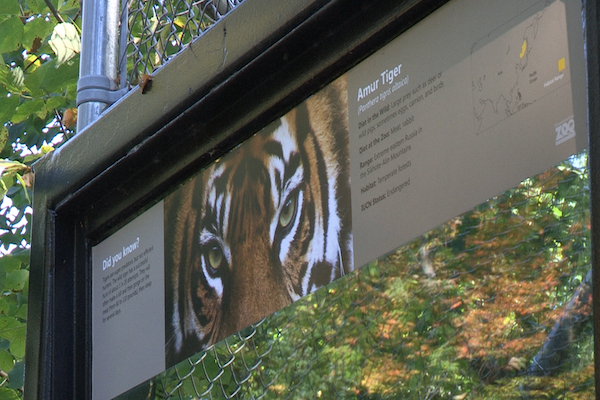 Sign outside the Amur Tiger exhibit at the Rosamond Gifford Zoo.