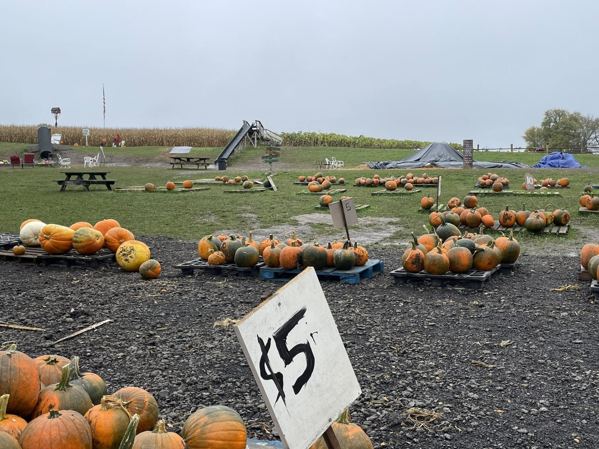 Business is booming despite the volunteer shortages at the Pumpkin Hollow