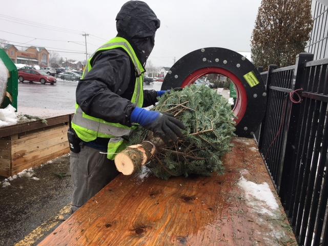 Man putting a Christmas tree through a baler.