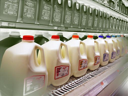 Gallons of milk are stocked on shelves.
