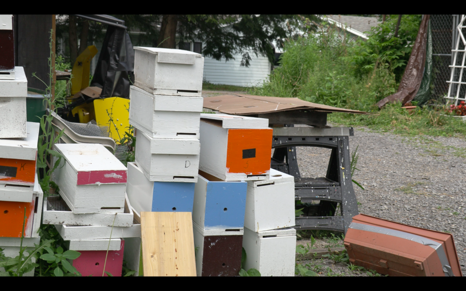 Cartons holding bees