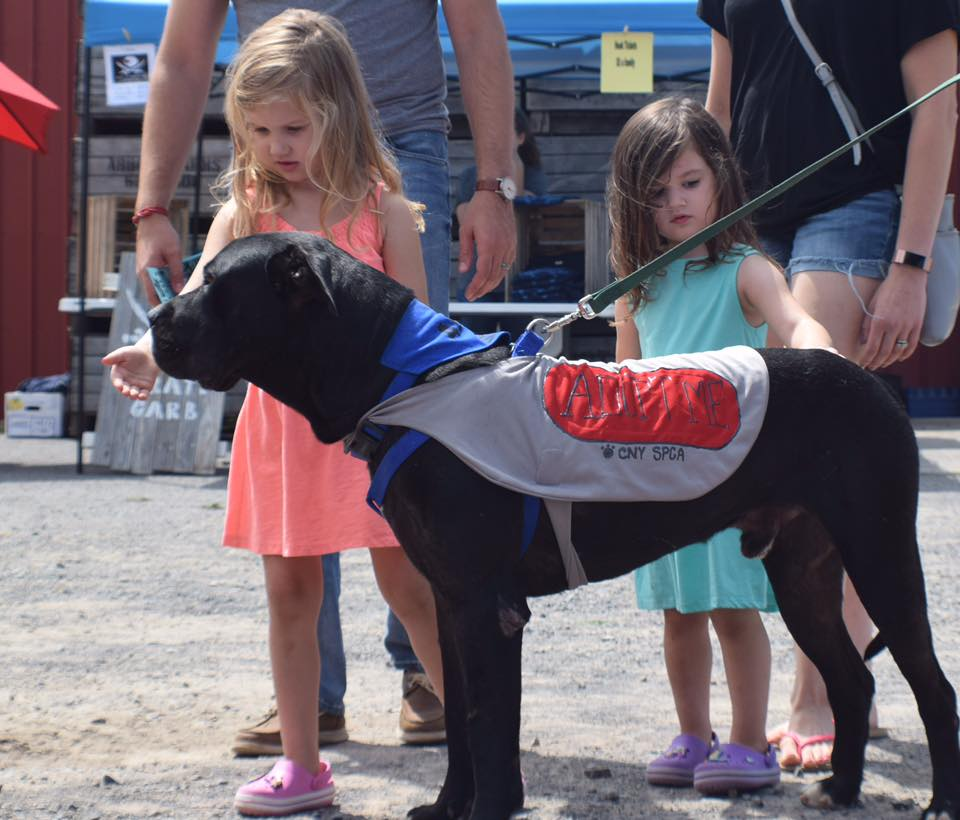 Kids surround dog at an adoption event for Humane CNY.