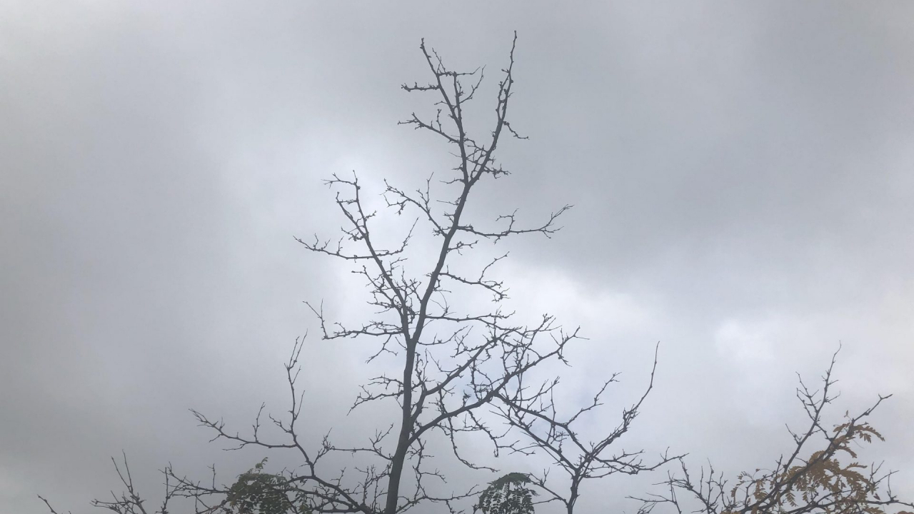 A tree without its leaves on a gloomy fall day