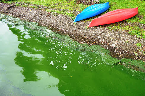 Green water, red and blue kayak, grass